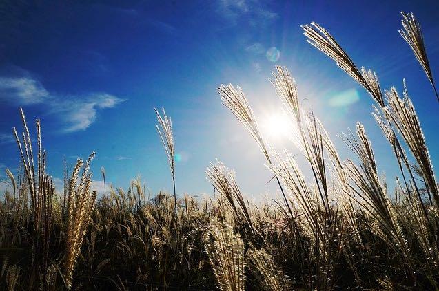 Sun in field